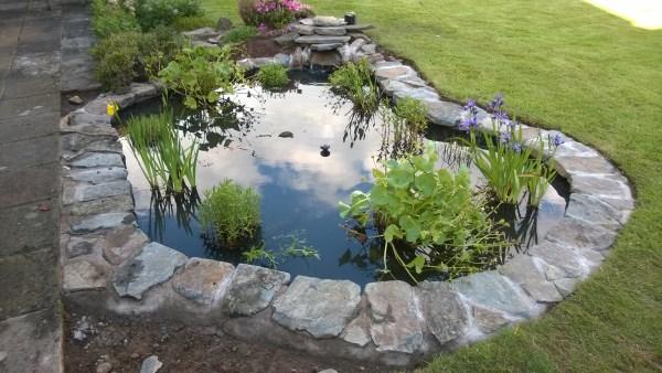 Ponds lakes carp aquaponics courses sustainable for Garden pond edging stones