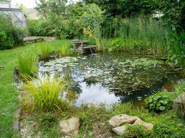 Refurbished pond 2 years after the work was carried out