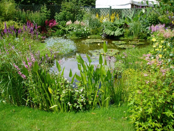 Ponds Lakes Carp Aquaponics Courses Sustainable